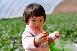 青岛草莓采摘