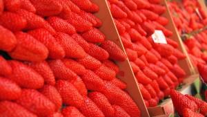 青岛郝家草莓