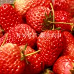 青岛草莓采摘团购开始了 还不快来