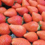 青岛草莓采摘正当时