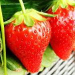 青岛草莓采摘一日游,给你不一样的体验