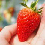 来城阳、赶大集、吃草莓