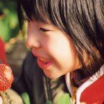 青岛草莓采摘节帮助城市快节奏生活人群放松的好去处
