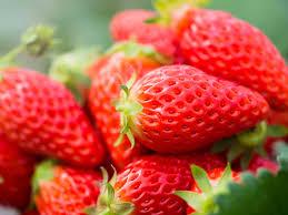怎么才算是好草莓,郝家采摘园告诉你