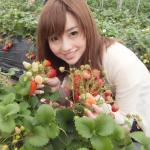 青岛草莓采摘节
