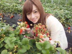 到青岛草莓采摘园采摘时,需要注意的事项