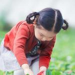 2019春节假期草莓采摘 到郝家草莓园