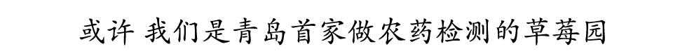 2019青岛草莓采摘