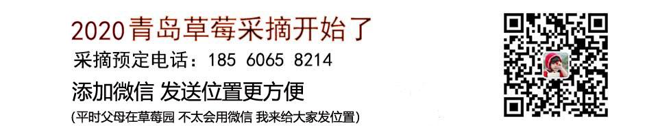 2020青岛草莓采摘
