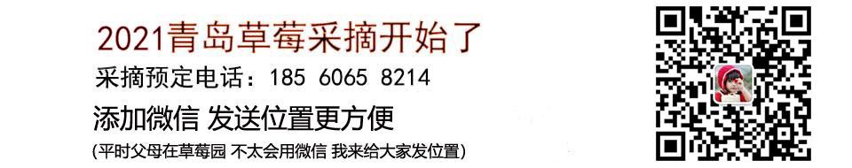 2021青岛草莓采摘