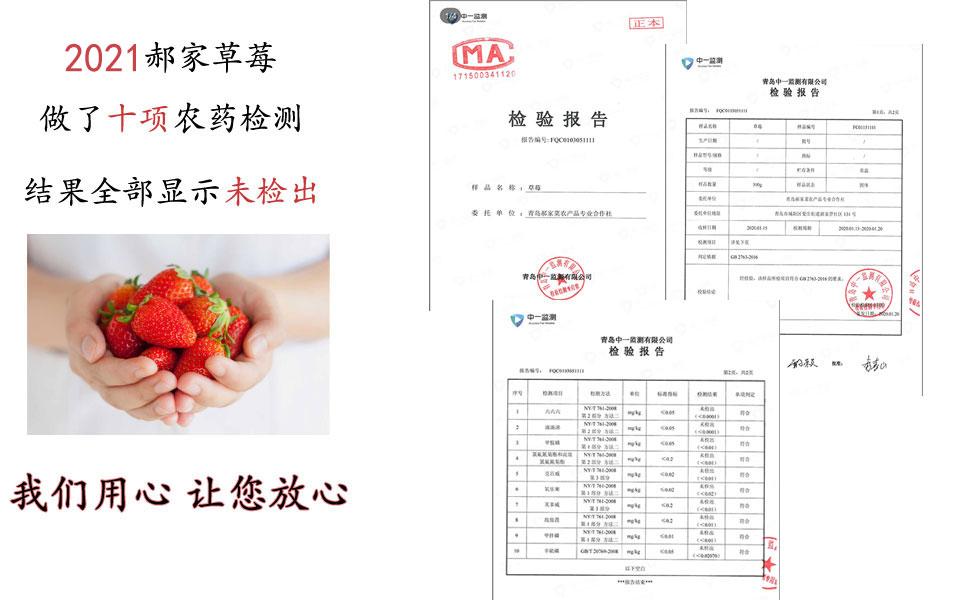 2021郝家草莓农业检测合格