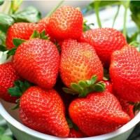 草莓塑料中棚有哪些类型?其结构如何?