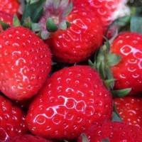 青岛草莓采摘节,来夏庄摘草莓吧