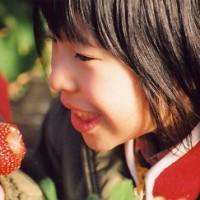 草莓产业的发展