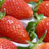 2013夏庄郝家营草莓上市了