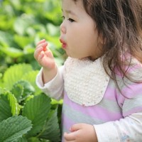青岛草莓采摘,为孩子和父母营造一个温馨的天堂